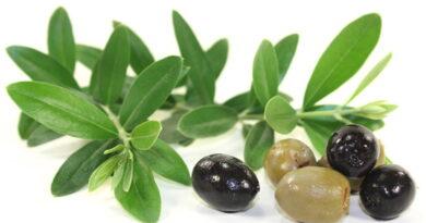 Olivenextrakt